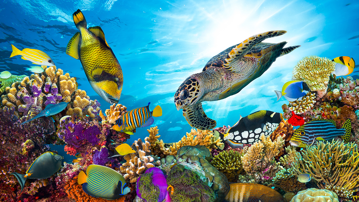 Coral reef (stockphoto-graf/Shutterstock.com)