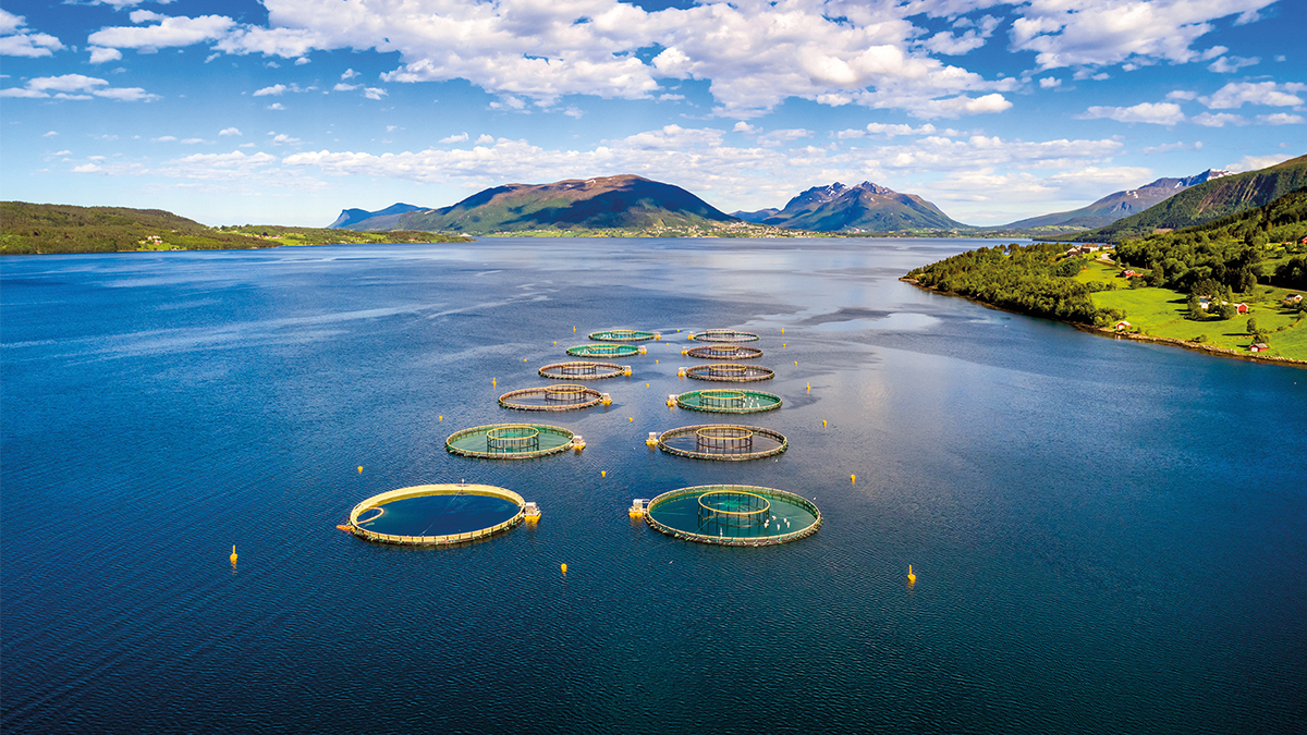 A salmon farm in Norway