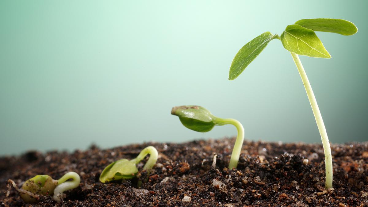 Букеты, купить ростки растений